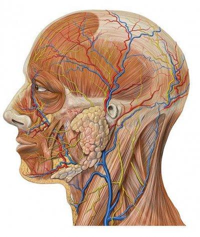 Anatomie und Pathologie