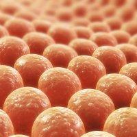 Polyurethan: Kunststoff für Polsterbezüge